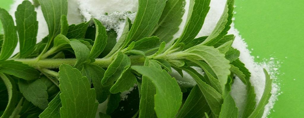 Wat is stevia en waar zit het in?
